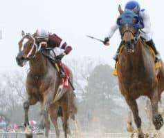 Como apostar em corrida de cavalos no Sportingbet